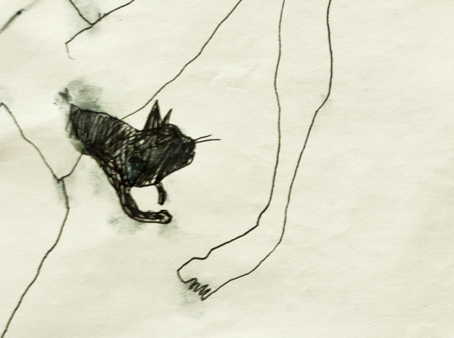 Filiformi-gato.jpg