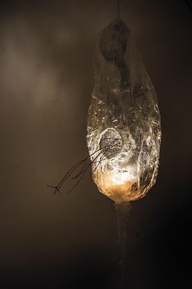 larva6.jpg